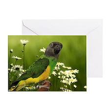 Senegal Parrot Birthday Card