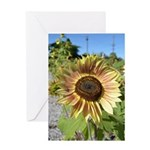 Beautiful Day Sunflower Greeting Card