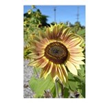 Beautiful Day Sunflower Postcards (Package of 8)