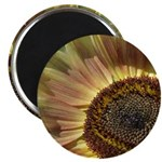 Beautiful Day Sunflower Magnet