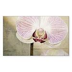 Pink Orchid Petal Sticker (Rectangle 50 pk)