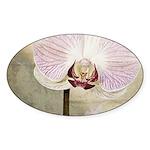 Pink Orchid Petal Sticker (Oval 10 pk)