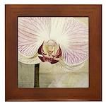 Pink Orchid Petal Framed Tile
