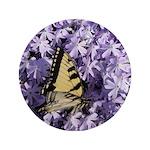 Swallowtail Phlox 3.5