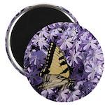 Swallowtail Phlox Magnet