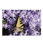Swallowtail Phlox Postcards (Package of 8)