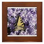 Swallowtail Phlox Framed Tile