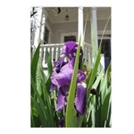 Southern Iris Garden Postcards (Package of 8)