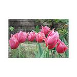 Tulips 38.5 x 24.5 Wall Peel