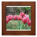 Tulips Framed Tile