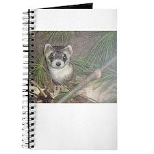Ferrets Journal