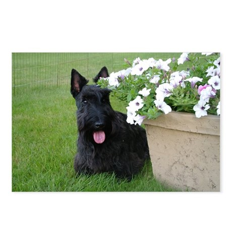 Dugan and Petunias Postcards (Package of 8)