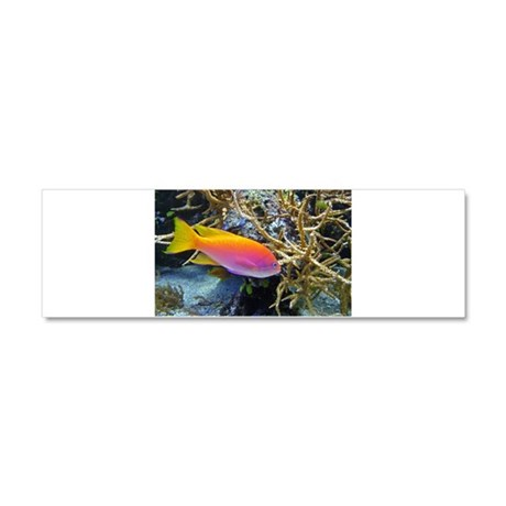 Pink and Yellow Fish 2 Car Magnet 10 x 3