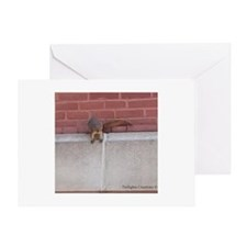 Hanging Out Squirrel Greeting Card