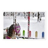 Carousel horse postcards Postcards
