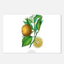 Histoire naturelle des orangers Tab 3 Postcards (P