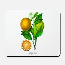 Histoire naturelle des orangers Tab 8 Mousepad
