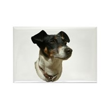 Jack Russell Dog Rectangle Magnet (100 pack)