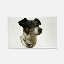 Jack Russell Dog Rectangle Magnet