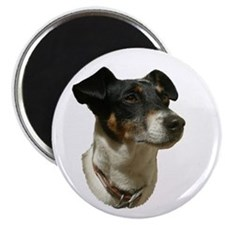 Jack Russell Dog Magnet