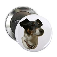 "Jack Russell Dog 2.25"" Button"