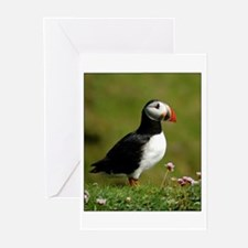 Puffin Greeting Cards (Pk of 10)