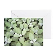 Botanical Greeting Cards (Pk of 20)