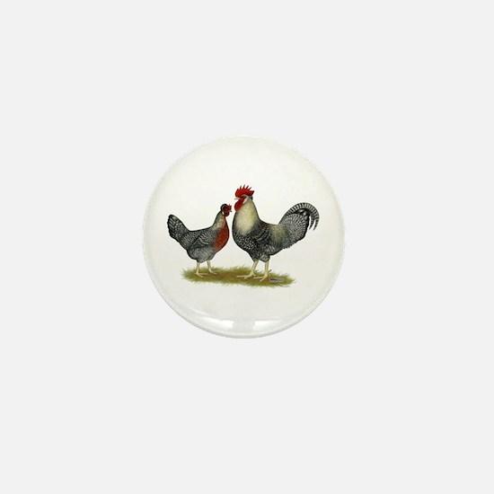 Legbar Cream Fowl Mini Button