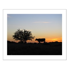 Cow at Sundown Posters