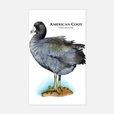 American Coot Decal
