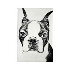 BOSTON TERRIER - DOG Rectangle Magnet