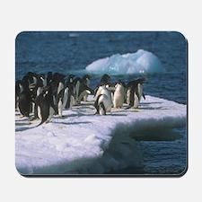 Penquins on Ice Mousepad