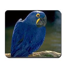 Blue Parrot Mousepad