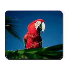 Gorgous Red Mousepad