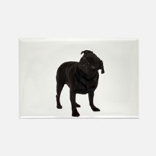 Pugs1 Rectangle Magnet