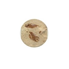 Fish Fossil Mini Button (10 pack)