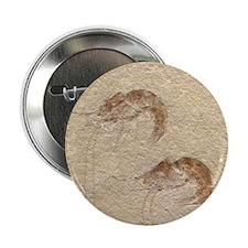 Pair of Fossilized Shrimp Button