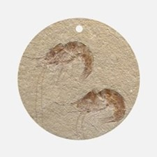 Pair of Fossilized Shrimp Ornament (Round)