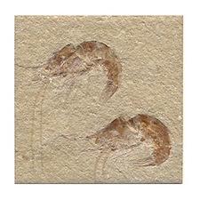 Pair of Fossilized Shrimp Tile Coaster