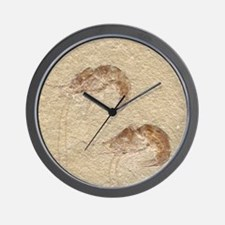 Pair of Fossilized Shrimp Wall Clock