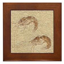Pair of Fossilized Shrimp Framed Tile