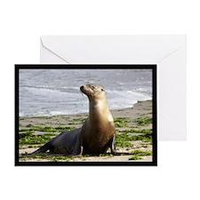 Cute Monterey bay Greeting Card