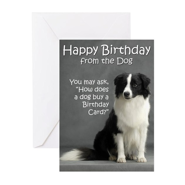 Border Collie Birthday Cards (Pk of 10) by shopdoggifts