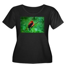 Scarlet Tanager T