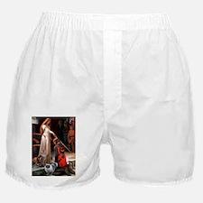 Accolade / MCoon+Persian Boxer Shorts