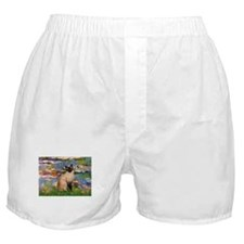 Lilies (2) & Siamese Boxer Shorts