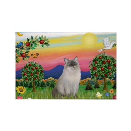 Bright Country / Ragdoll Rectangle Magnet