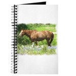 Texas Hill Country Horse Journal