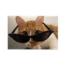 Cool Cat Wearing Sunglasses Rectangle Magnet