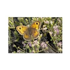Butterfly Yellow and Brown Rectangle Magnet